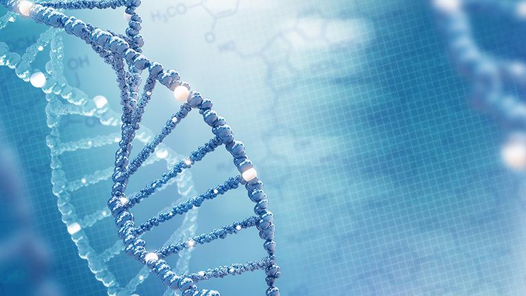 非翻訳性RNAは合成しやすく分解しやすい生体内の便利屋
