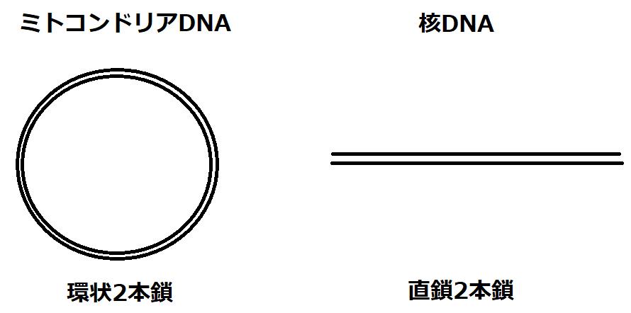 環状と直鎖